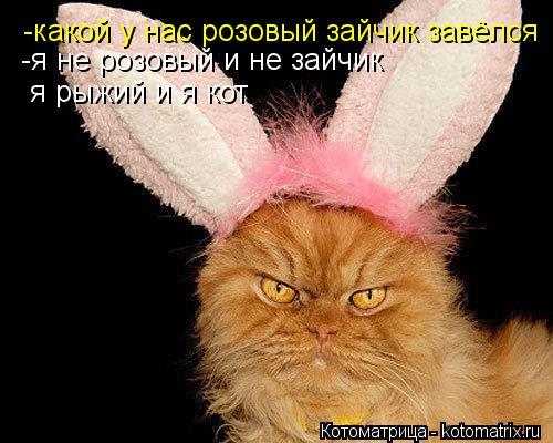 Котоматрица: -какой у нас розовый зайчик завёлся -я не розовый и не зайчик я рыжий и я кот