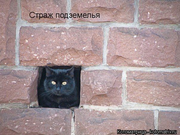 Котоматрица: Страж подземелья