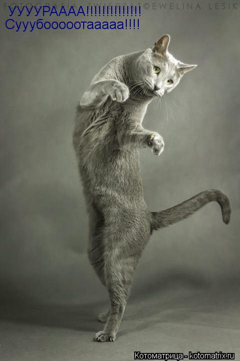 Котоматрица: УУУУРАААА!!!!!!!!!!!!!! Сууубооооотааааа!!!!