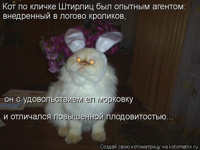 Котоматрица: Кот по кличке Штирлиц был опытным агентом: внедренный в логово кроликов,  он с удовольствием ел морковку и отличался повышенной плодовитос