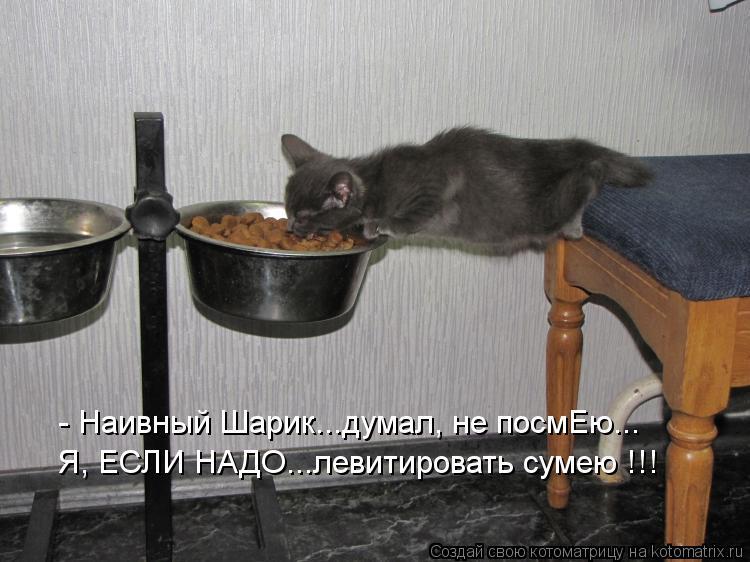Котоматрица: - Наивный Шарик...думал, не посмЕю... Я, ЕСЛИ НАДО...левитировать сумею !!!