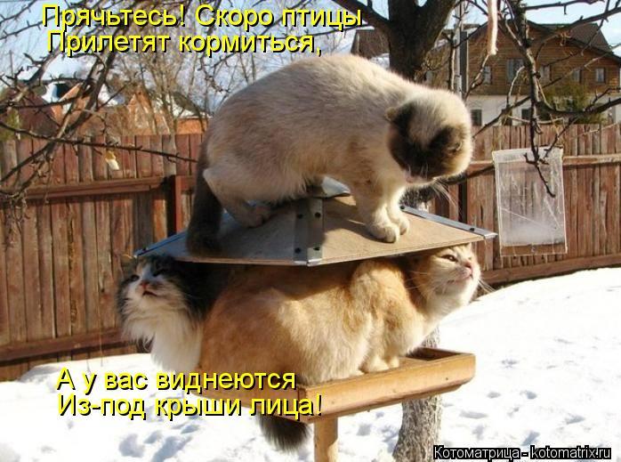 Котоматрица: Прячьтесь! Скоро птицы Прилетят кормиться, А у вас виднеются Из-под крыши лица!