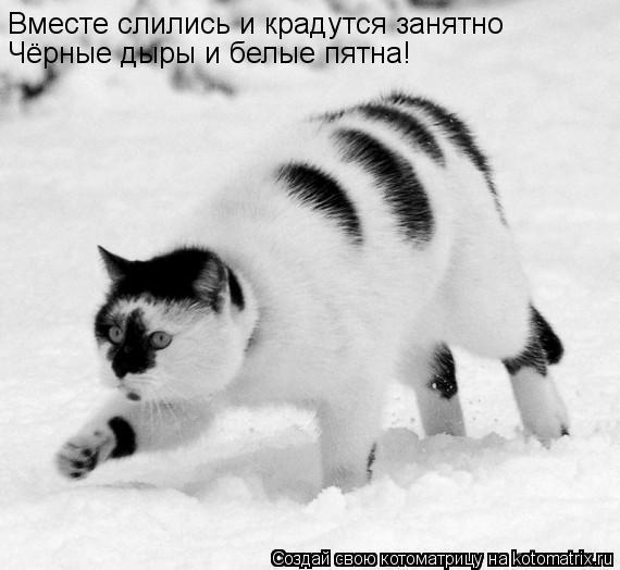 Котоматрица: Вместе слились и крадутся занятно Чёрные дыры и белые пятна!