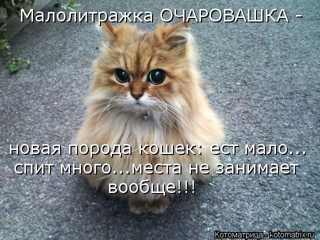 Котоматрица: Малолитражка ОЧАРОВАШКА - новая порода кошек: ест мало... спит много...места не занимает вообще!!!