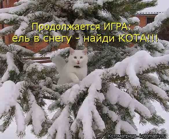 Котоматрица: Продолжается ИГРА: ель в снегу - найди КОТА!!!