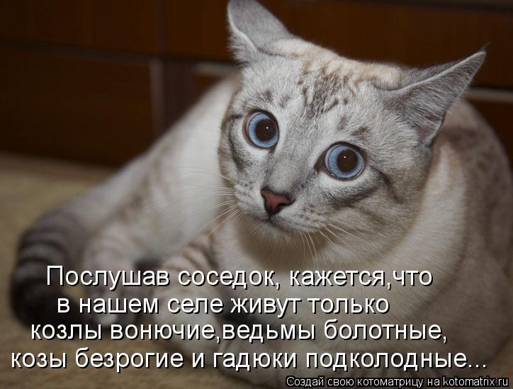 Котоматрица: Послушав соседок, кажется,что в нашем селе живут только козлы вонючие,ведьмы болотные, козы безрогие и гадюки подколодные...