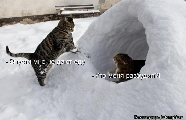 Котоматрица: - Кто меня разбудил?! - Впусти мне не дают еду.