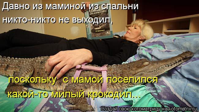 Котоматрица: Давно из маминой из спальни никто-никто не выходил,  поскольку  с мамой поселился какой-то милый крокодил...