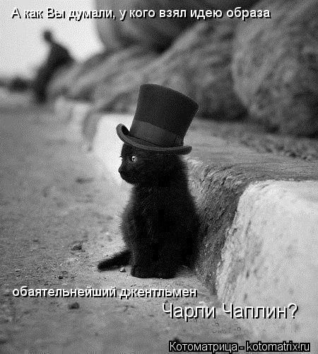 Котоматрица: А как Вы думали, у кого взял идею образа  обаятельнейший джентльмен Чарли Чаплин?