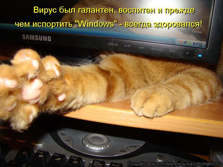 """Котоматрица: Вирус был галантен, воспитан и прежде  чем испортить """"Windows"""" - всегда здоровался!"""