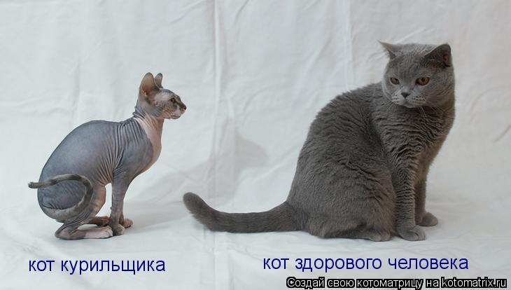 Котоматрица: кот здорового человека кот курильщика