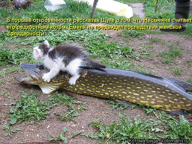 Котоматрица: В порыве откровенности рассказав Щуке о том, что Несмеяна считает его редкостным котом, Емеля не предвидел последствий женской солидарнос