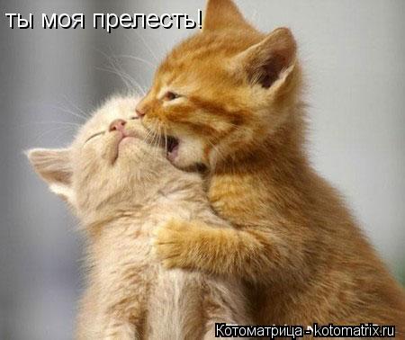 Котоматрица: ты моя прелесть!