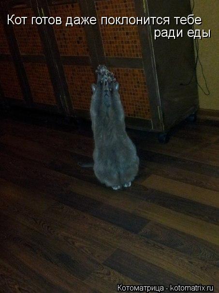 Котоматрица: Кот готов даже поклонится тебе ради еды
