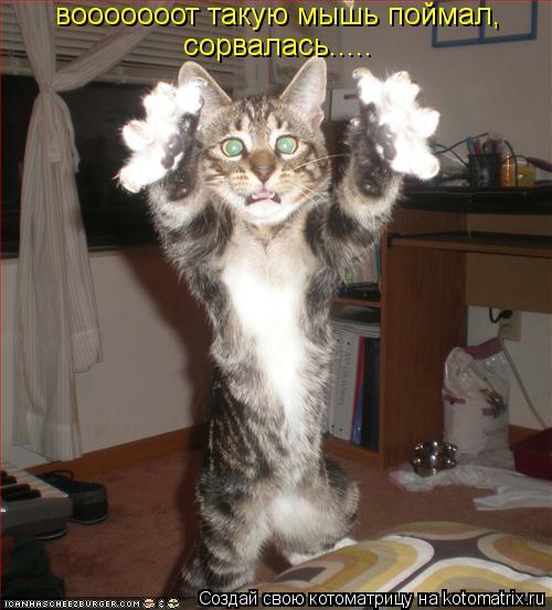 Котоматрица: вооооооот такую мышь поймал, сорвалась.....