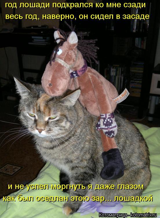 Котоматрица: год лошади подкрался ко мне сзади весь год, наверно, он сидел в засаде и не успел моргнуть я даже глазом как был оседлан этою зар... лошадкой