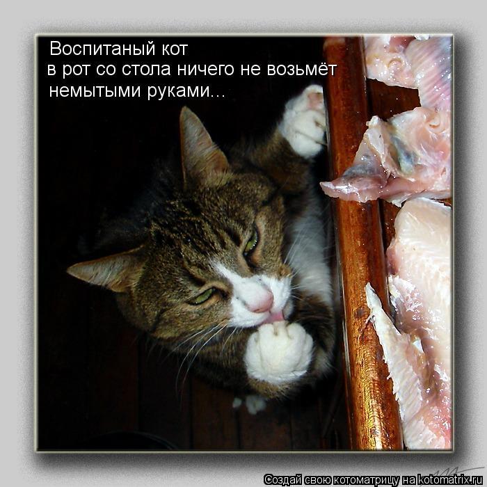 Котоматрица: Воспитаный кот в рот со стола ничего не возьмёт немытыми руками...