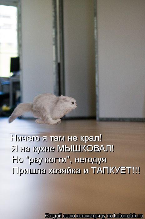 "Котоматрица: Ничего я там не крал! Я на кухне МЫШКОВАЛ! Но ""рву когти"", негодуя Пришла хозяйка и ТАПКУЕТ!!!"