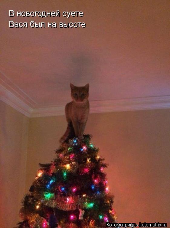 Котоматрица: В новогодней суете  Вася был на высоте
