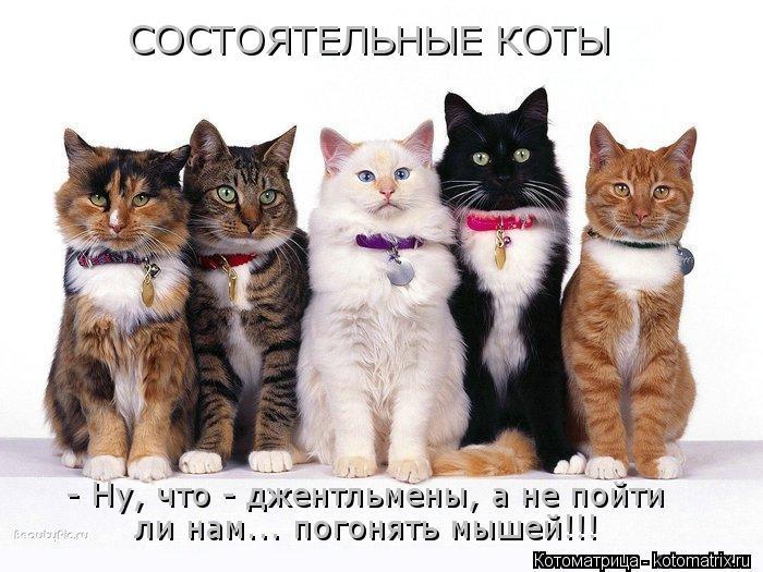 Котоматрица: СОСТОЯТЕЛЬНЫЕ КОТЫ - Ну, что - джентльмены, а не пойти ли нам... погонять мышей!!!