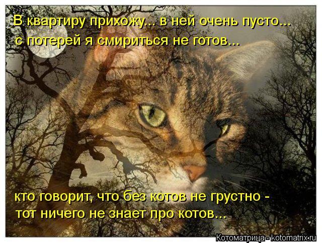 Котоматрица: В квартиру прихожу... в ней очень пусто... тот ничего не знает про котов... кто говорит, что без котов не грустно - с потерей я смириться не готов