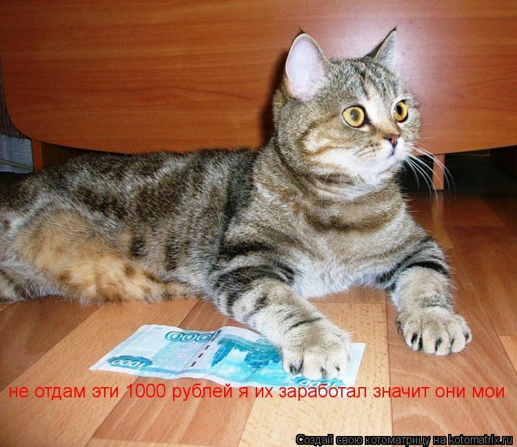 Котоматрица: не отдам эти 1000 рублей я их заработал значит они мои