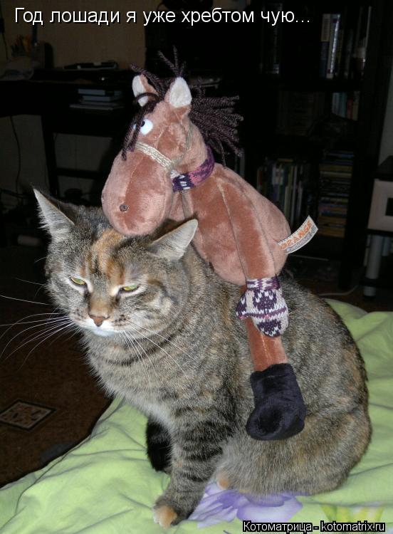Котоматрица: Год лошади я уже хребтом чую...