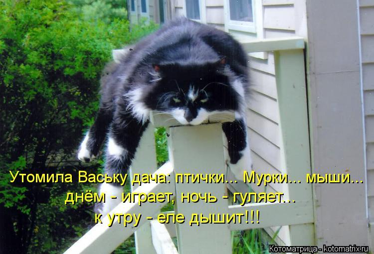 Котоматрица: Утомила Ваську дача: птички... Мурки... мыши... днём - играет, ночь - гуляет... к утру - еле дышит!!!
