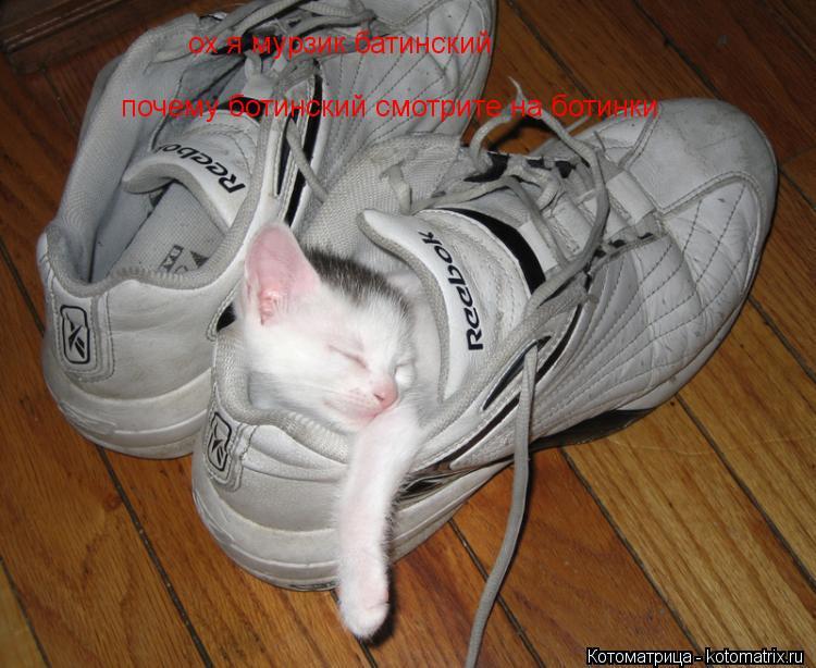 Котоматрица: ох я мурзик батинский почему ботинский смотрите на ботинки