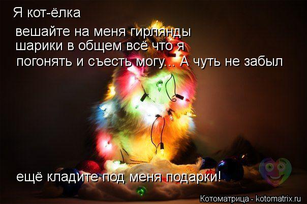 Котоматрица: Я кот-ёлка   вешайте на меня гирлянды  шарики в общем всё что я погонять и съесть могу... А чуть не забыл ещё кладите под меня подарки!