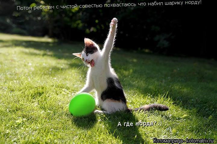 Котоматрица: Потом ребятам с чистой совестью похвастаюсь что набил шарику морду! А где морда?