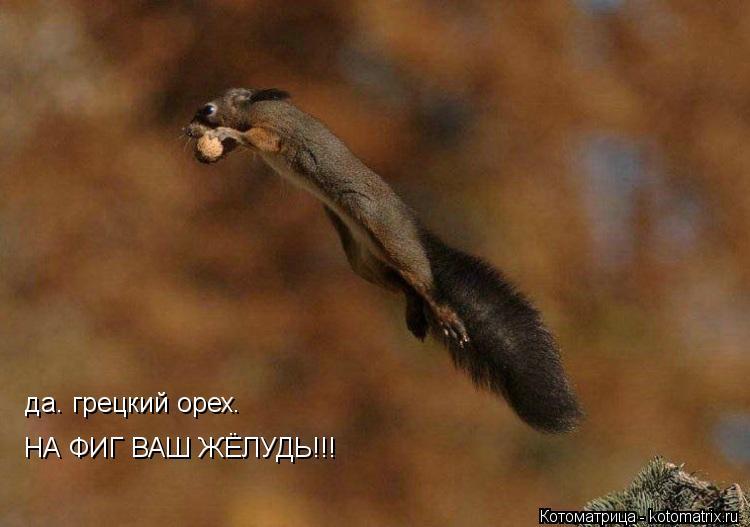 Котоматрица: да. грецкий орех. НА ФИГ ВАШ ЖЁЛУДЬ!!!