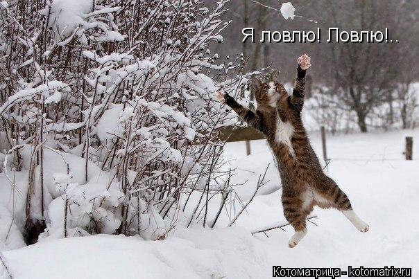 Котоматрица: Я ловлю! Ловлю!..