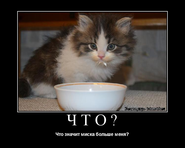 Котоматрица: ЧТО? Что значит миска больше меня?