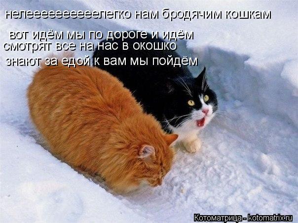 Котоматрица: нелеееееееееелегко нам бродячим кошкам вот идём мы по дороге и идём смотрят все на нас в окошко знают за едой к вам мы пойдём