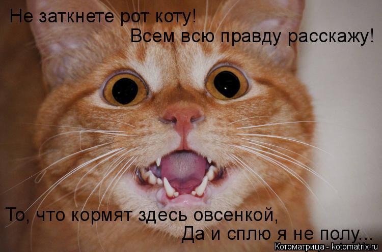 Котоматрица: Не заткнете рот коту! Всем всю правду расскажу! Да и сплю я не полу... То, что кормят здесь овсенкой,