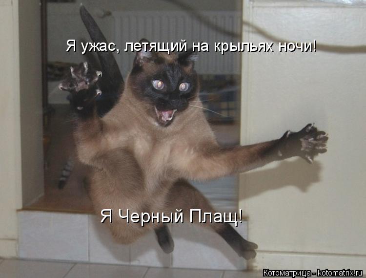 Котоматрица: Я ужас, летящий на крыльях ночи! Я Черный Плащ!