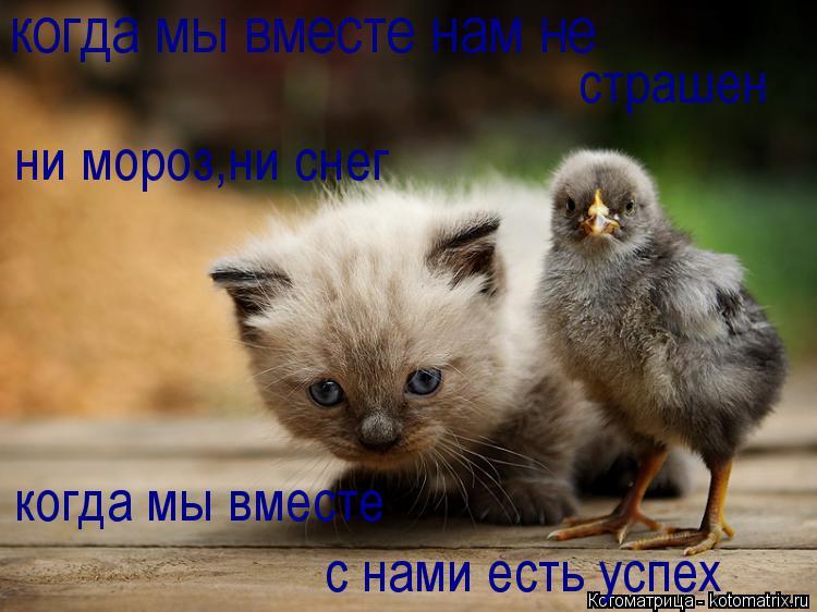 Котоматрица: когда мы вместе нам не страшен ни мороз,ни снег когда мы вместе с нами есть успех
