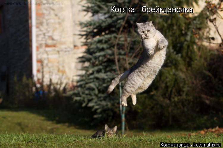 Котоматрица: Котяка - брейкдансяка