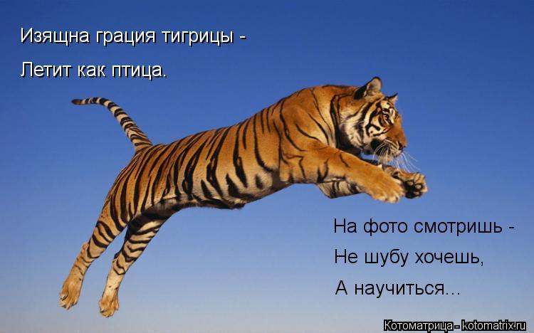 Котоматрица: Изящна грация тигрицы -  Летит как птица. На фото смотришь - Не шубу хочешь, А научиться...