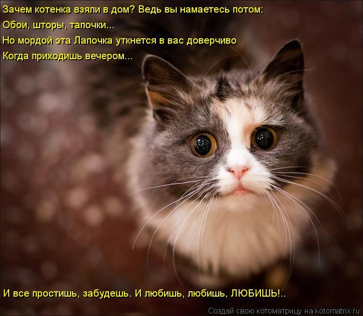 Котоматрица: Зачем котенка взяли в дом? Ведь вы намаетесь потом: Обои, шторы, тапочки... Но мордой эта Лапочка уткнется в вас доверчиво Когда приходишь веч