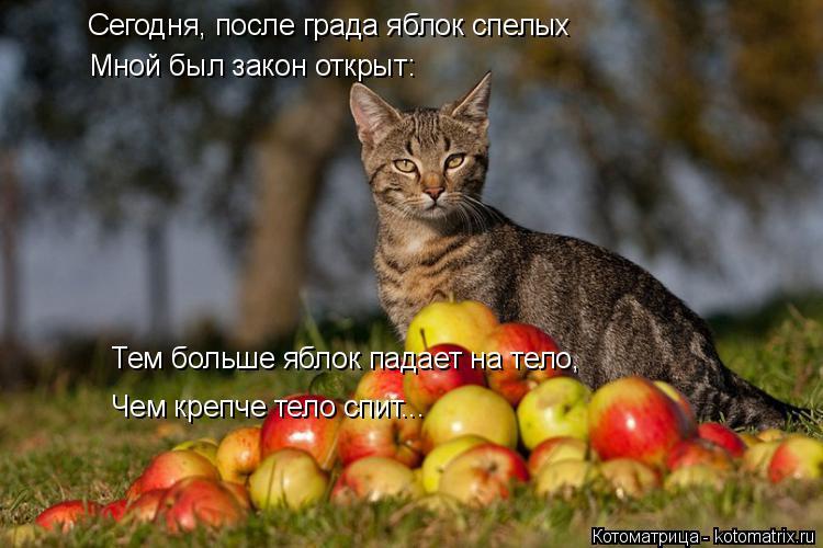 Котоматрица: Сегодня, после града яблок спелых Мной был закон открыт: Тем больше яблок падает на тело, Чем крепче тело спит...