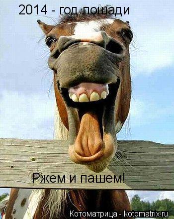 Котоматрица: 2014 - год лошади Ржем и пашем!