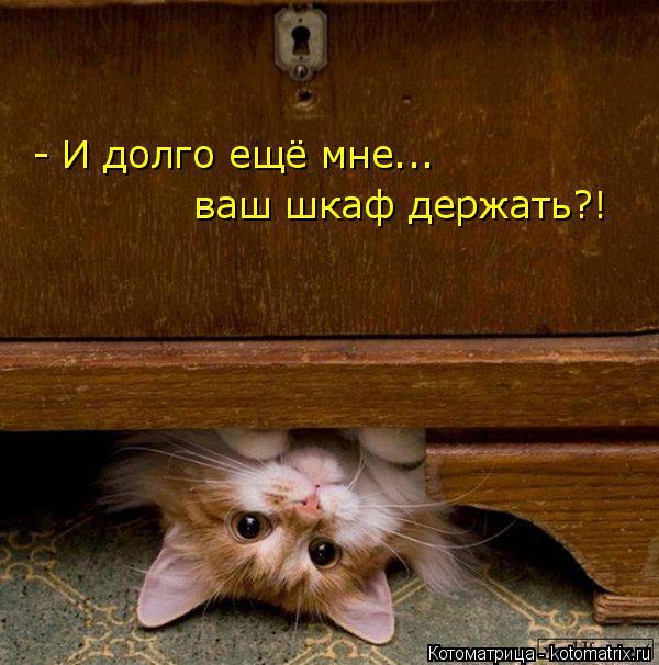 Котоматрица: - И долго ещё мне... ваш шкаф держать?!