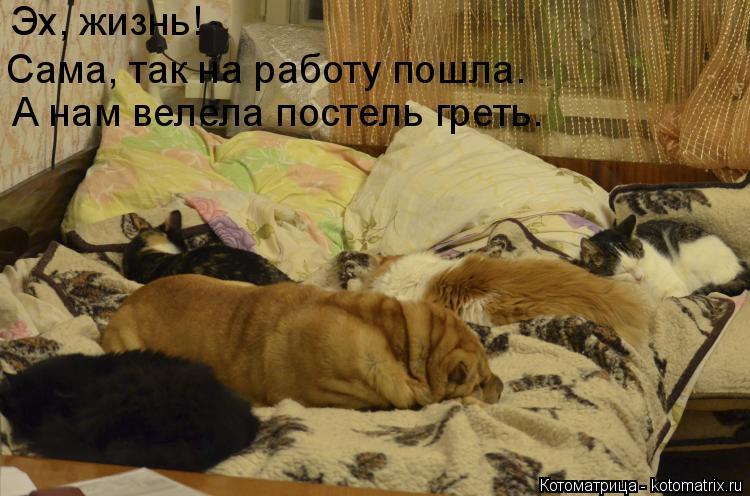 Котоматрица: Эх, жизнь! А нам велела постель греть. Сама, так на работу пошла.