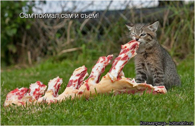 Котоматрица: Сам поймал,сам и съем!