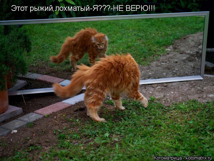 Котоматрица: Этот рыжий,лохматый-Я???-НЕ ВЕРЮ!!!