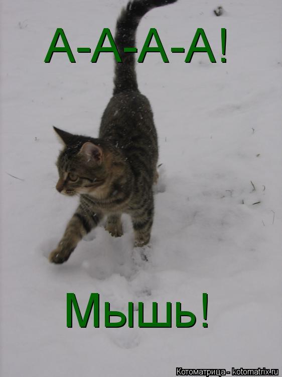 Котоматрица: Мышь! А-А-А-А!