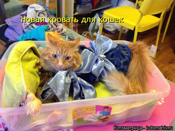 Котоматрица: Новая кровать для кошек