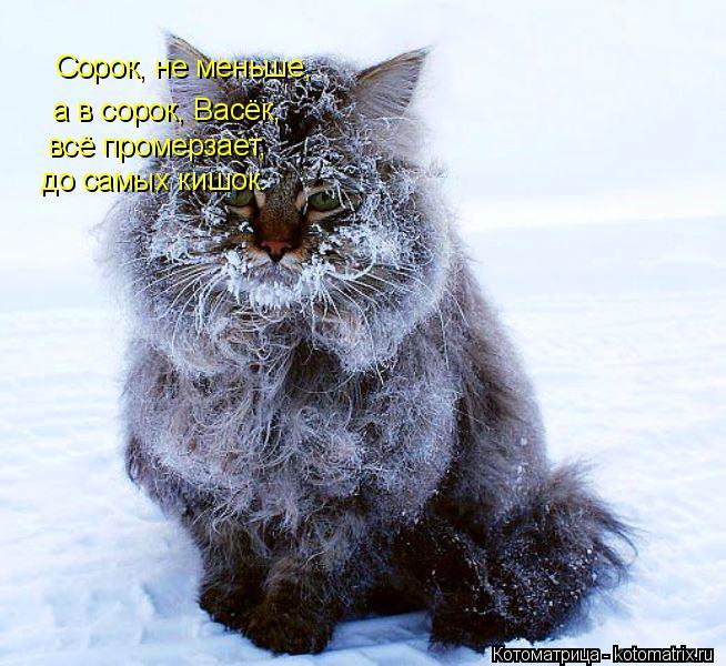 Котоматрица: Сорок, не меньше, а в сорок, Васёк, всё промерзает, до самых кишок.